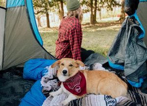 can dogs camp in cold weather