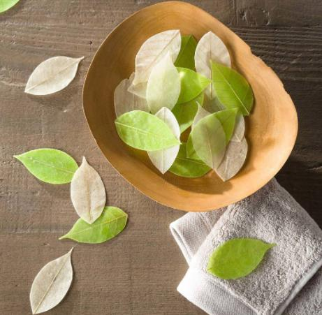 carry some soap leaves for your family camping