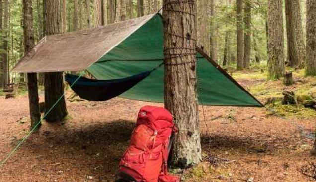 choose proper trees to set up a tarp